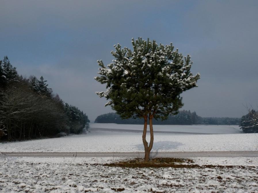 Winter in der Umgebung