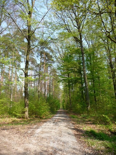 Frühlingswald in der Umgebung