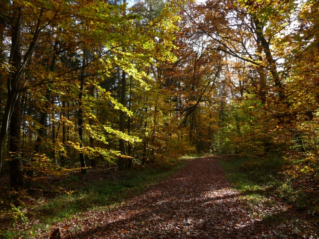 Herbstwald in der Umgebung